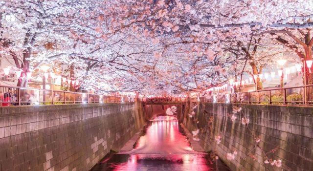 渋谷の桜・お花見を楽しむならここ