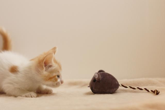渋谷のネズミ駆除・ネズミ対策